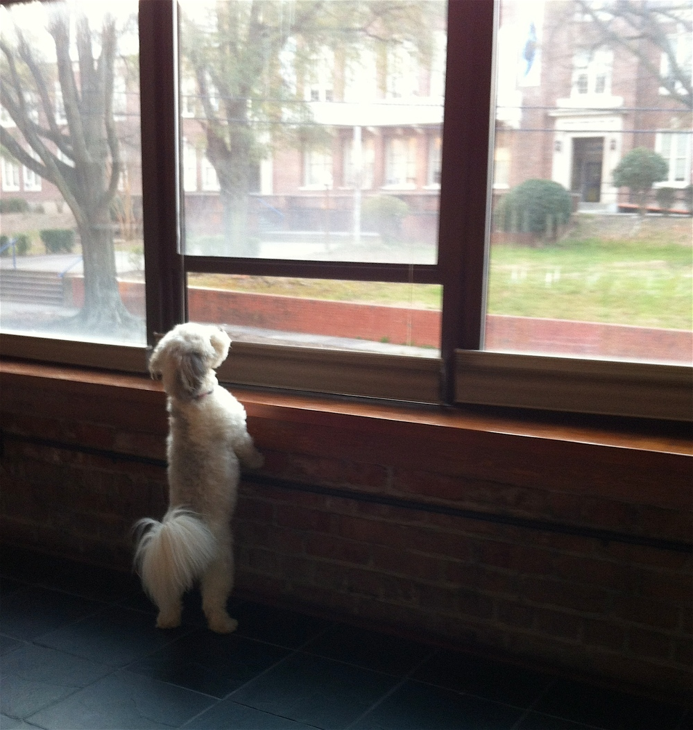 roo at the window